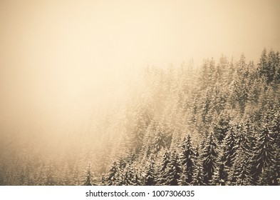 winter forest in snow and fog, Iezer , Romania