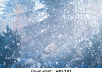 Winter forest with snow and hoarfrost on trees