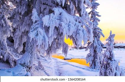 Winter forest snow scene. Sunset forrest winter snow scene. Winter snow sunset forest scene. Sunset winter snow forrest view