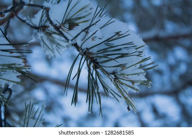 Winter forest in the southern Urals