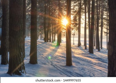Winter forest at sunset. Sun through trees in snowy forest park. Evening in frosty forest. Christmas background