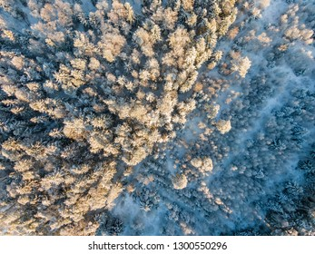 Winter forest from top flying