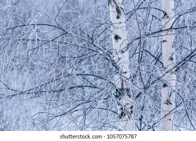 Winter forest and trees