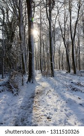 Winter forest trees with fresh snow and bright sunshine