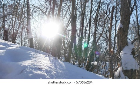 Winter forest trees in nature the snow glare of sun, sunlight landscape