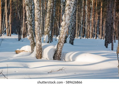 The winter forest under snow. The wood in Siberia in the winter. The wood in Russia in the winter. Sun snow and wood