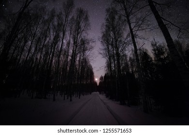 Winter forest under starry sky