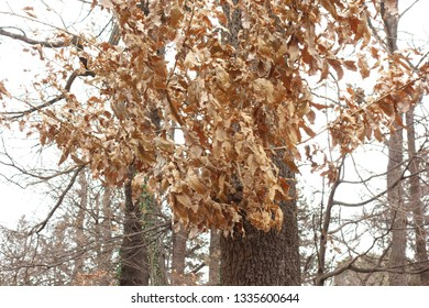 Winter forest where dead leaves remain