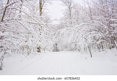 Winter forest wilderness right after a heavy snowfall