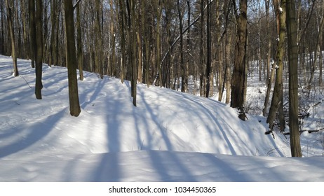 winter forest wood trees snow sky blue seasons white sunshine frosty day nature