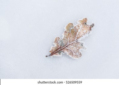 Winter frost on an Oak leaf with frost covered background. Landscape with copy space.