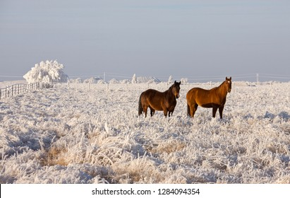 Winter Frost Saskatchewan Canada ice storm horse