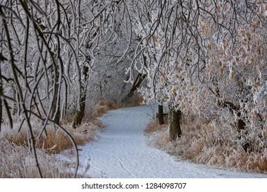 Winter Frost Saskatchewan Canada ice storm danger