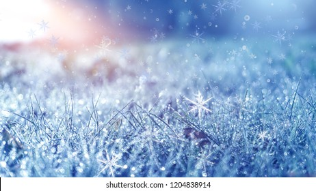 Winter frosty morning. Winter snow background, blue color, snowflakes, sunlight, macro. Frozen grass under the snow, snowflakes and sunlight, rays.