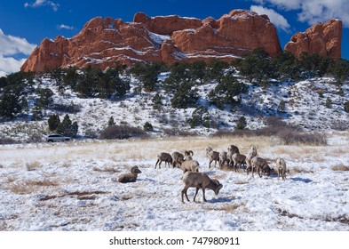 Winter at Garden of the Gods with Big Horn Sheep