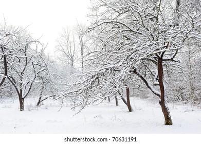 A winter garden, just after the snowfall