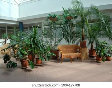 Winter garden. Rest bench. Green trees in the interior
