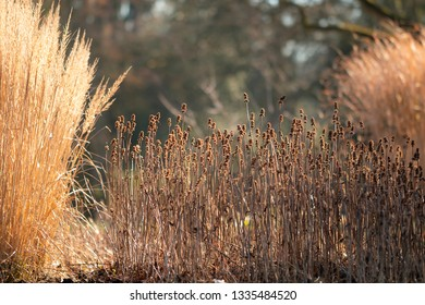 Winter gardens with bright grasses and beautiful light