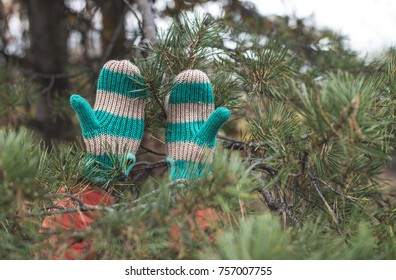 Winter gloves and fir branches