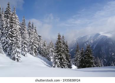 Winter in Godeanu Mountains, Carpathians, Romania, Europe