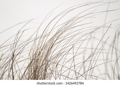 Winter grass on the sand dunes in Bouctouche