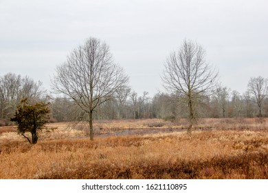 Winter at the Great Swamp in New Jersey