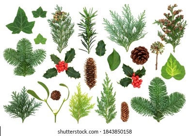 Winter greenery with natural flora & fauna of holly, ivy, mistletoe, cedar cypress, spruce fir, yew & pine cones. Nature study composition. Flat lay, top view.