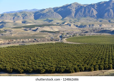 Winter harvesting is about to begin in these Central California orange groves nestled in the foothills of the Southern Sierra Nevada Mountains
