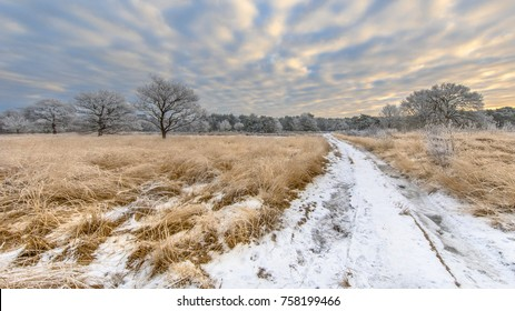 Winter heathland landscape panorama with snow and hoarfrost on grass and trees in Baggelhuizen nature reserve in Assen, Drenthe
