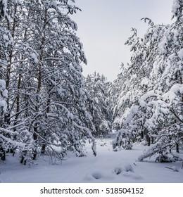 In winter, heavy snow fell in the park