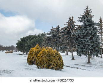 Winter helps to accentuate vegetation otherwise overlooked during summer as seen at Jaycee Gardens Park in Port Dalhousie, Ont
