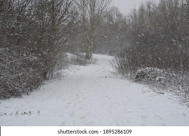 winter is here, a blanket of snow covering the forest