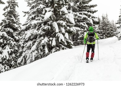 Winter hiking in white snowy forest. Man walking with backpack in winter woods. Travel and healthy lifestyle outdoors in beautiful nature.