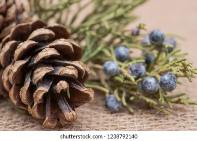Winter holiday decoration: juniper twig and cones on burlap background