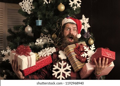 Winter holiday and xmas. shopping and party celebration. Santa claus man with present box at christmas tree. Christmas man with beard on scared face hold gift. boxing day and cyber Monday, New year.