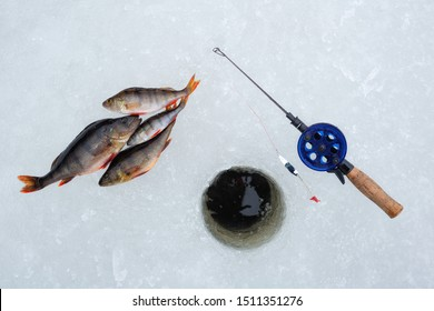 Winter Ice fishing concept. Perch fish and tackle lies on snow.
