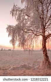 Winter impressions - Beautiful sunrise in a snowy landscape