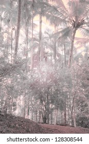 Winter in the Jungle, Infrared Photography