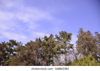 Winter landscape - Shutterstock ID 568865383