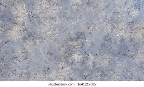 Winter landscape. Aerial view of frosty forest at wintertime, trees covered snow.  Sunny morning, soft sunlight. Drone shot, from above