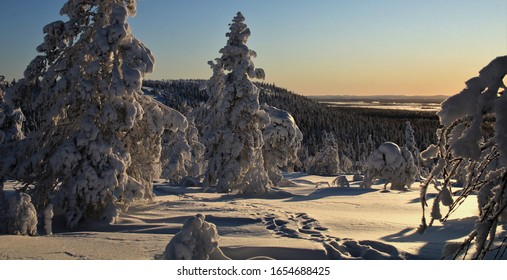 Winter landscape in the arctic midday sun in the Pyhä-Luosto National Park in finish Lapland. A snowshoe hike over the Pikku Luosto Hill.