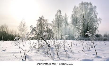 Winter landscape with big field