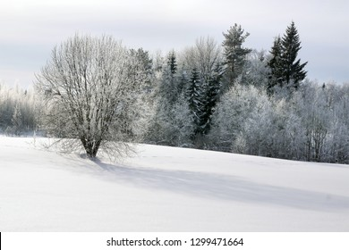 Winter landscape with big tree