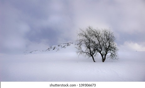 Winter landscape with birch threes and mountain