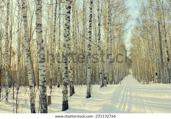 winter-landscape-birchwood-600w-23113276