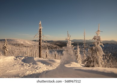 Winter landscape with blue sky. Snail icing on trees. Beautiful winter landscape.