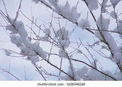 Winter landscape, branches and snow