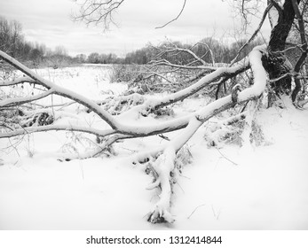 Winter landscape. Bushes and trees covered with snow.