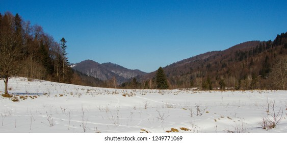 the winter landscape of the Carpathians - a valley in the snow with a view of the mountains covered with mixed beech and fir forest. winter landscape Carpathians - Beskydy region.