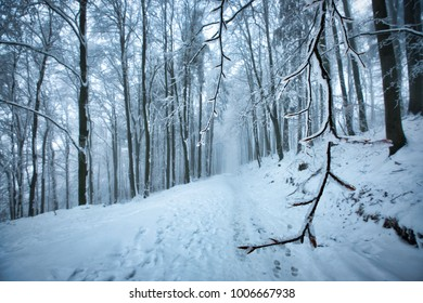 Winter landscape. Cold winter day in middle of woods. Snowy path surrounded by forest covered in frost.